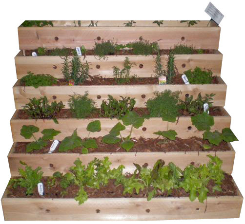 Tiered Vegetable Garden Related Keywords Suggestions