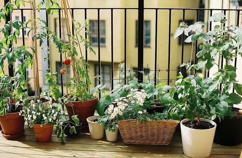 Balcony decoration ideas pots4