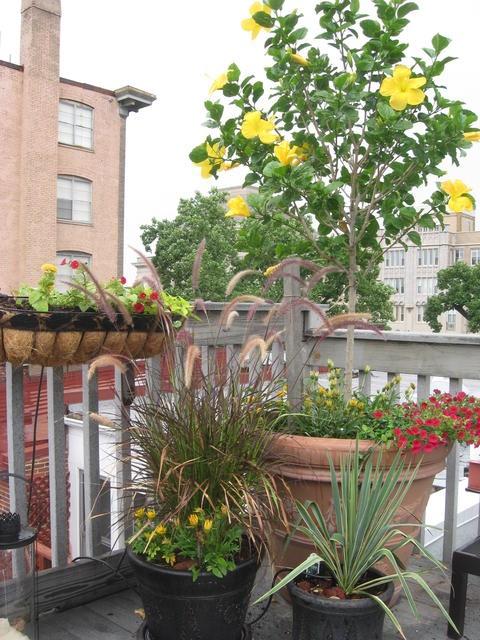 green balcony ideas4
