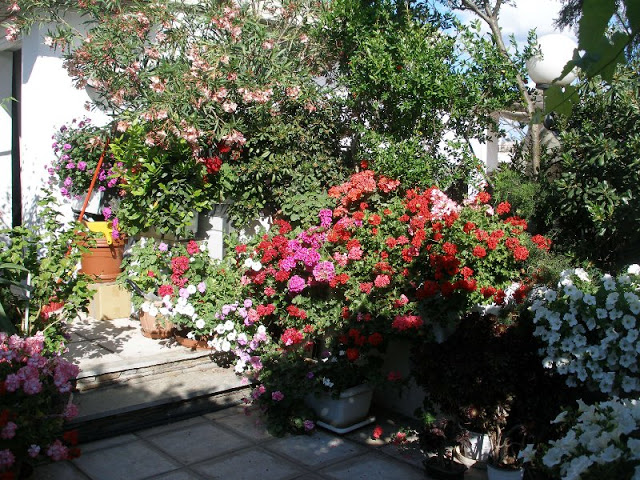 The most beautiful roof garden2