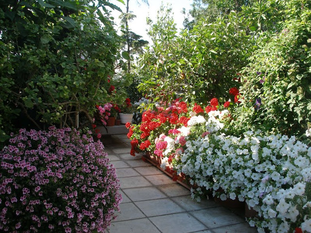 The most beautiful roof garden3