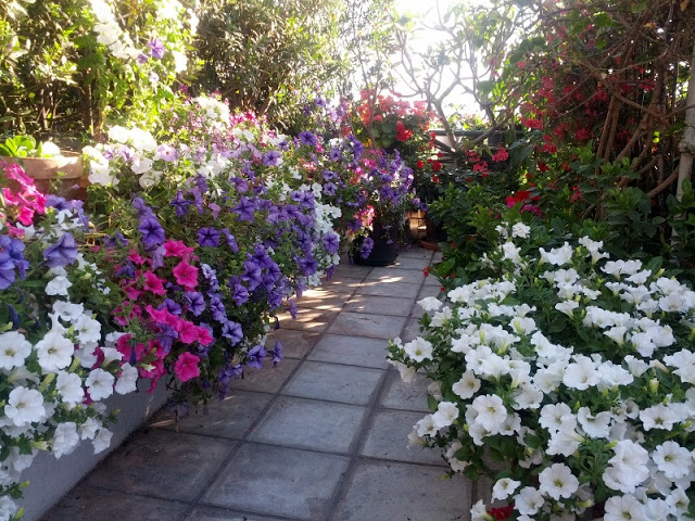 The most beautiful roof garden6