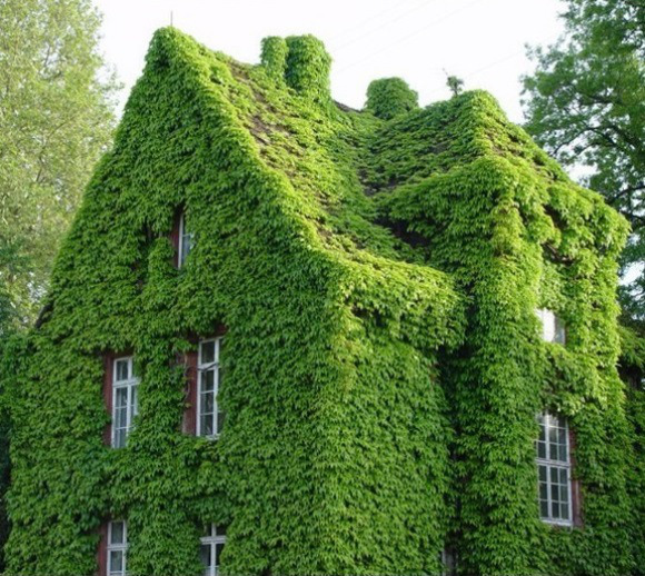 Climbing plants and outdoors16