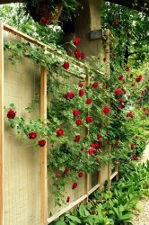 Ideas for small gardens - Balconies7