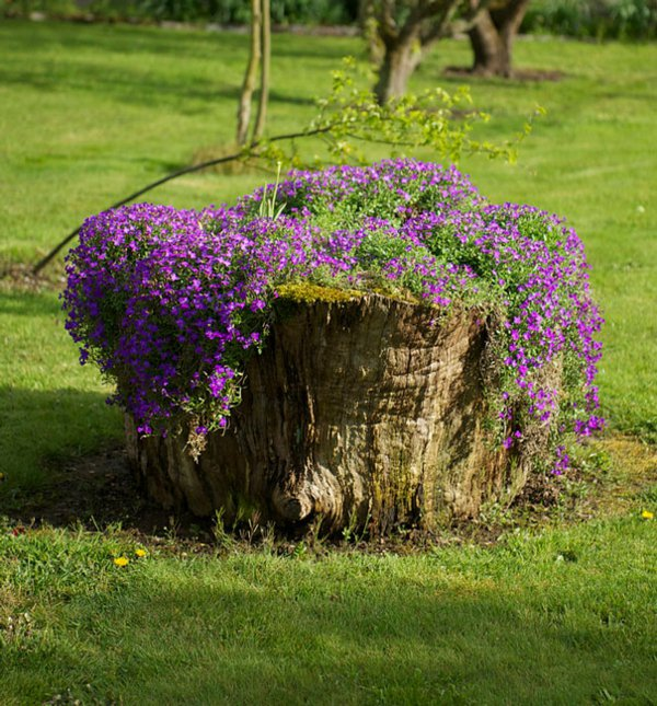 plant pot from stump4