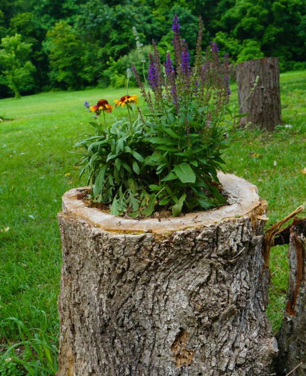 plant pot from stump6
