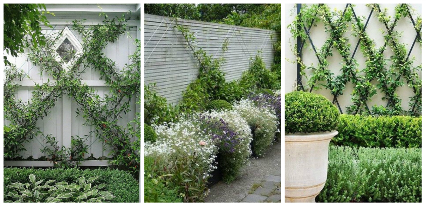 Climbing plants ideas