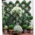 Climbing plants ideas12