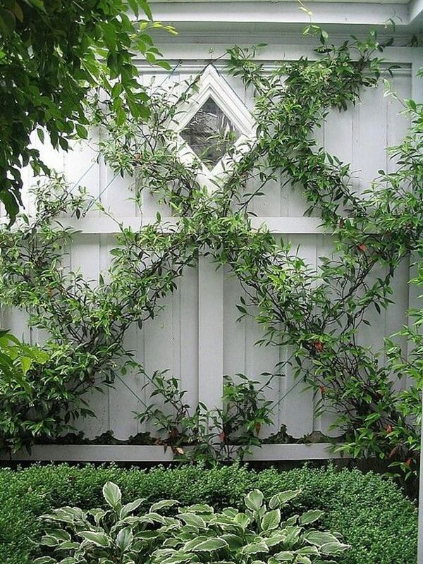 Climbing plants ideas2
