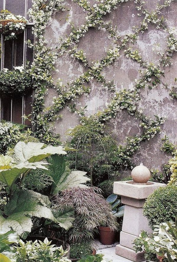 Climbing plants ideas3