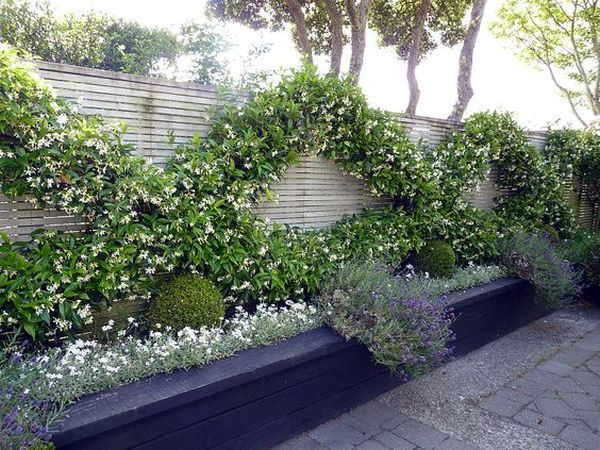 Climbing plants ideas5