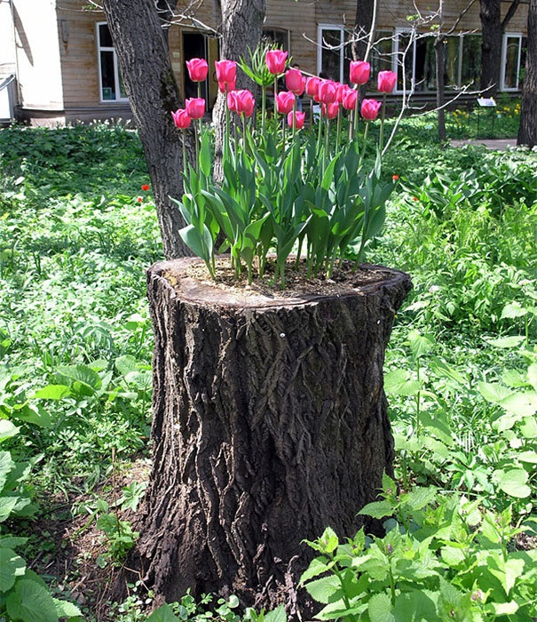 Old stumps flower gardens10