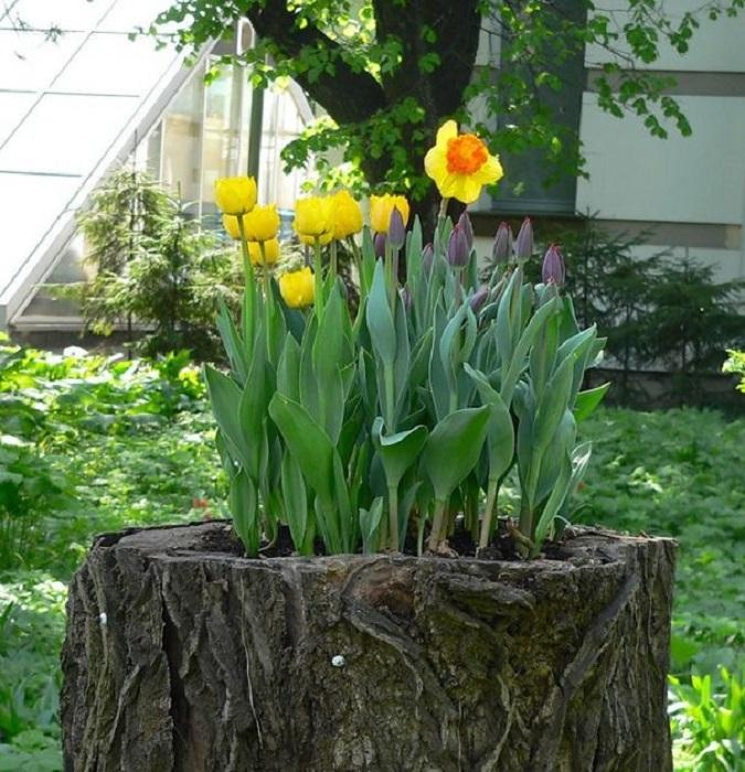 Old stumps flower gardens11