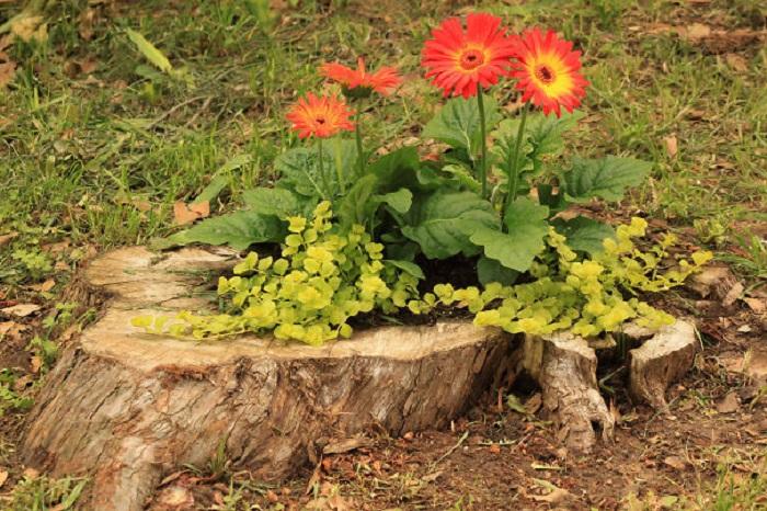 Old stumps flower gardens12