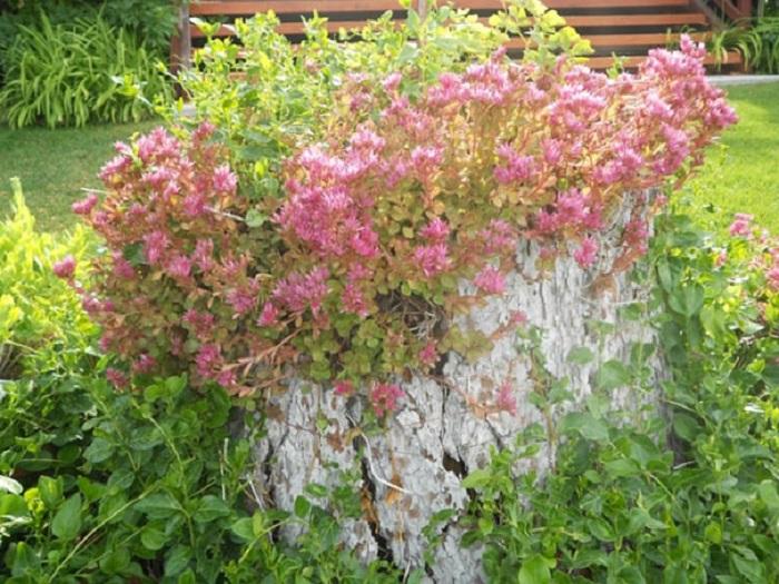 Old stumps flower gardens14