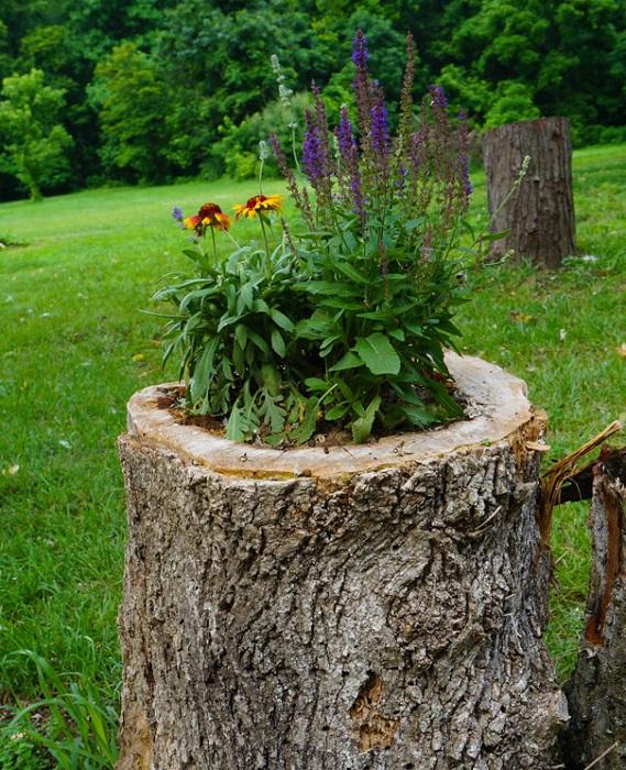 Old stumps flower gardens15