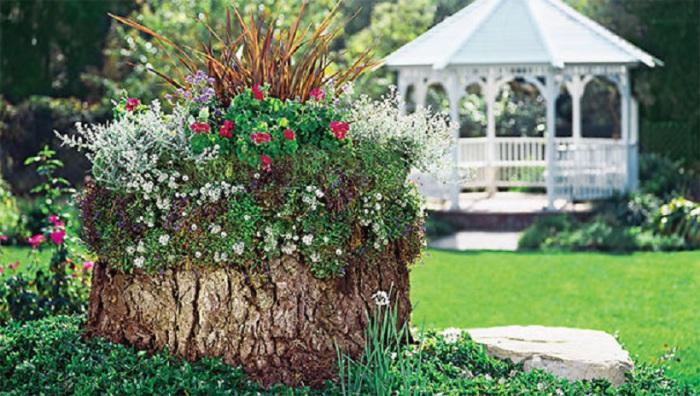 Old stumps flower gardens16