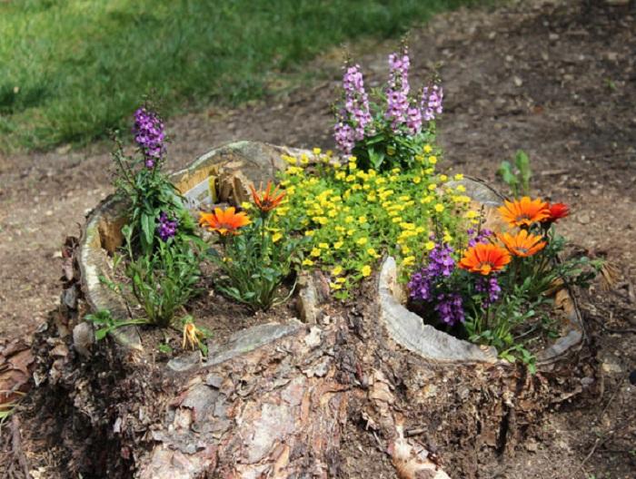Old stumps flower gardens17