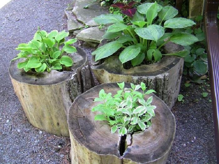 Old stumps flower gardens18