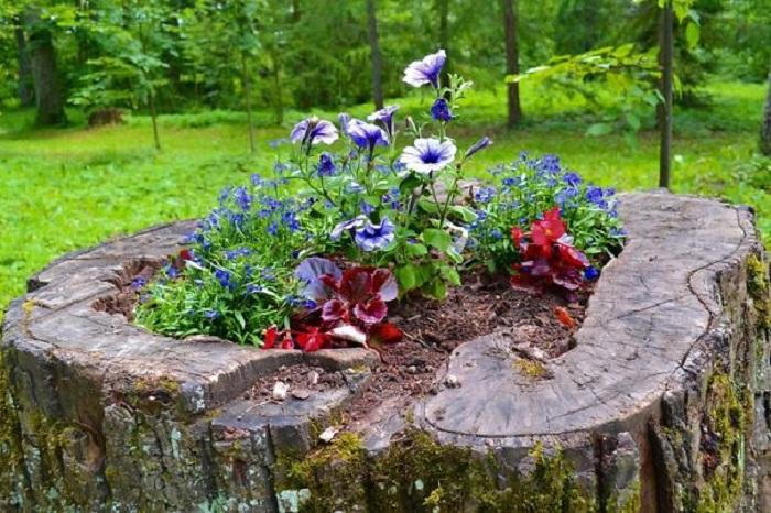 Old stumps flower gardens19
