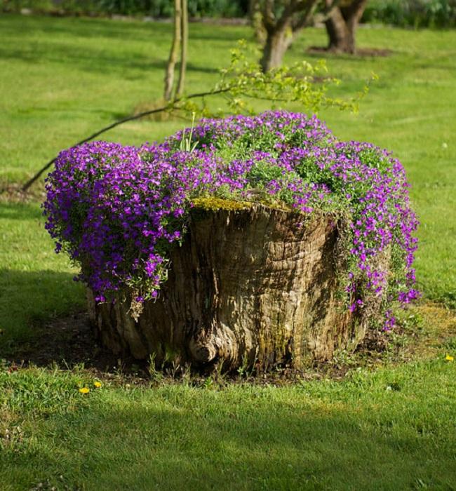 Old stumps flower gardens2