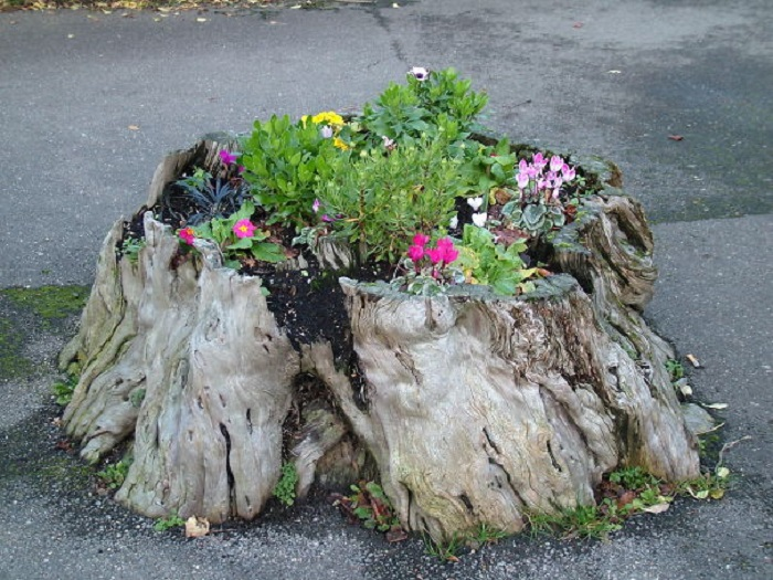 Old stumps flower gardens21