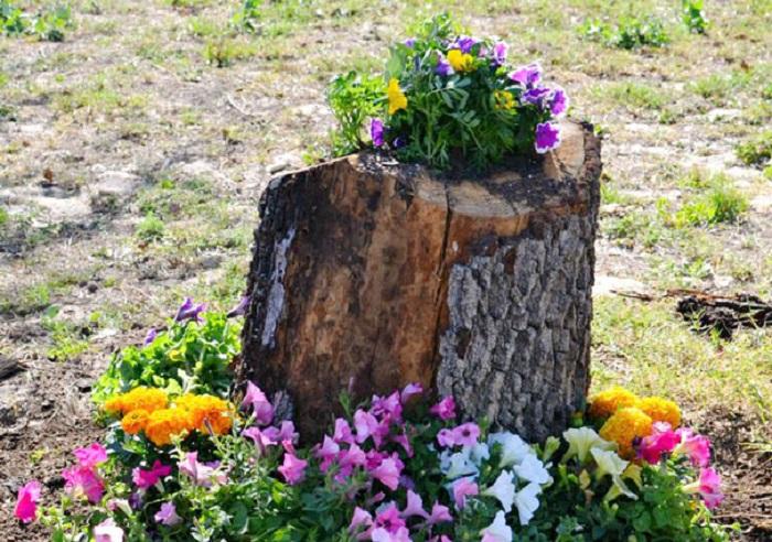 Old stumps flower gardens24