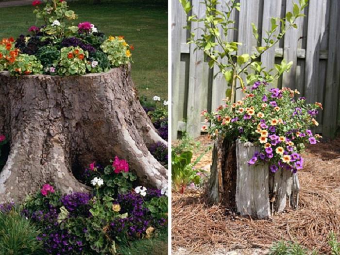 Old stumps flower gardens25