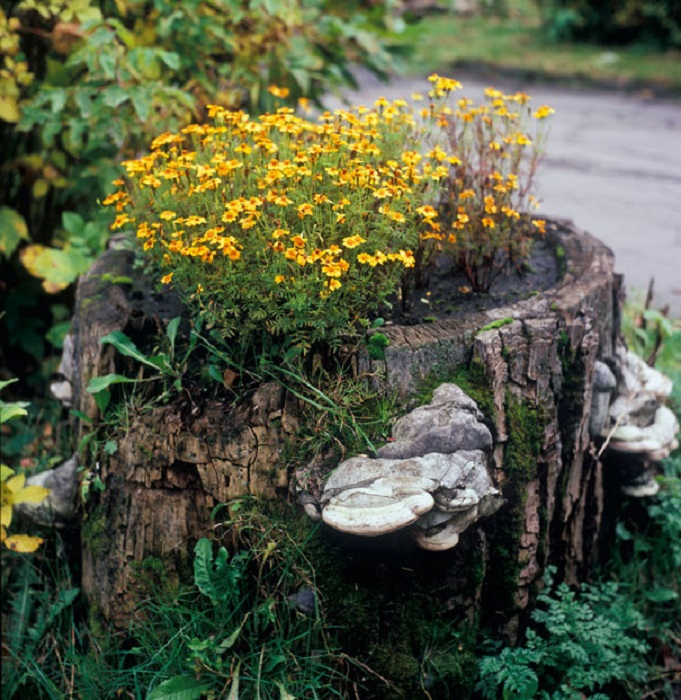 Old stumps flower gardens3