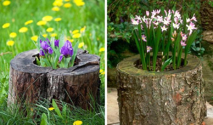 Old stumps flower gardens4