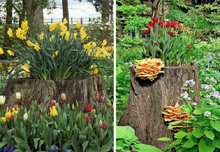 Old stumps flower gardens6