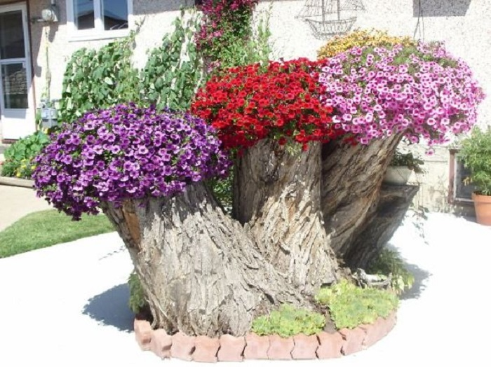 Old stumps flower gardens7