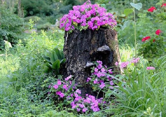 Old stumps flower gardens9