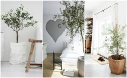 interior decorating with olive trees