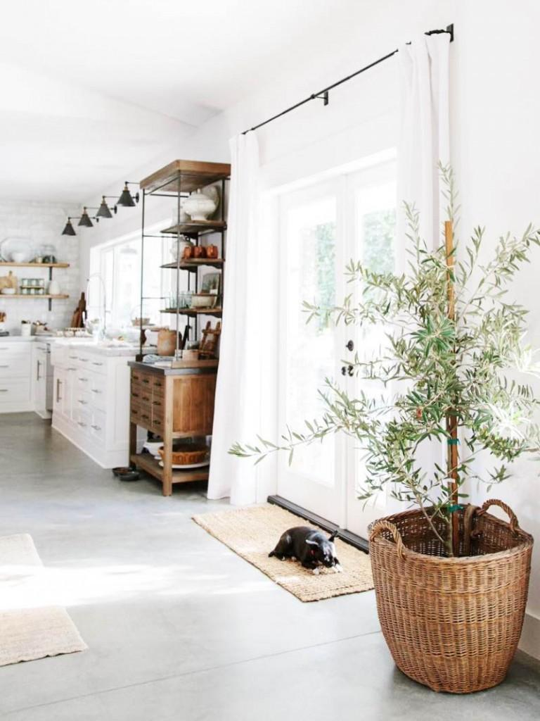 interior decorating with olive trees1