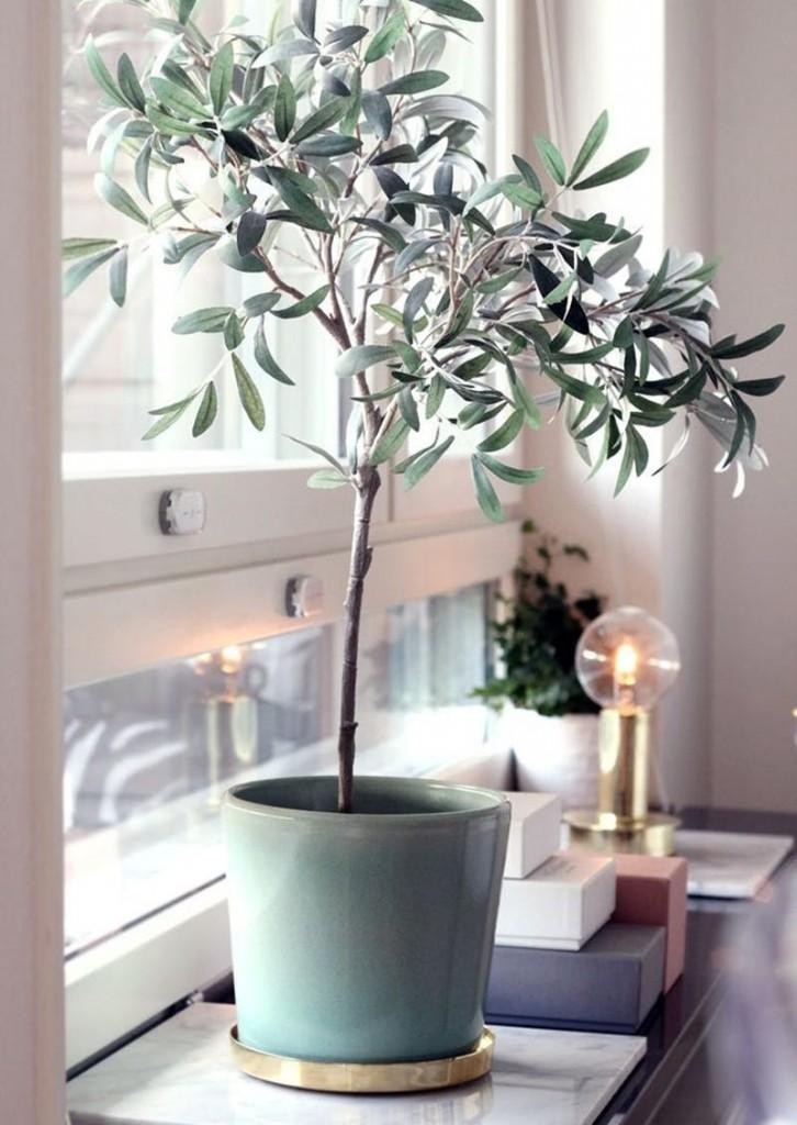 interior decorating with olive trees10
