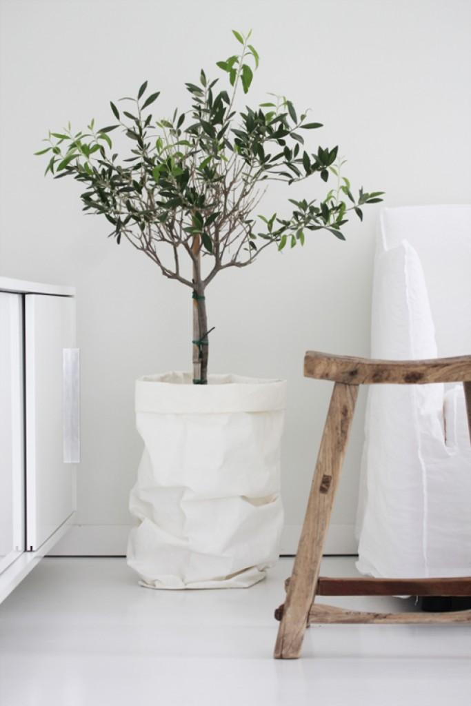 interior decorating with olive trees2