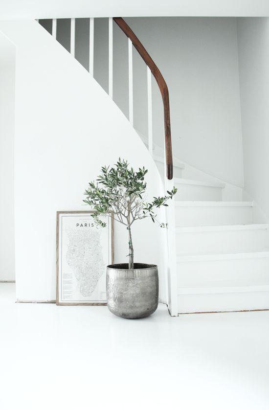 interior decorating with olive trees9