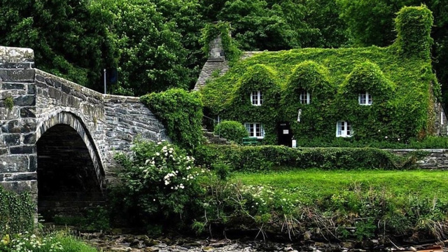 Houses drowned in greenery15
