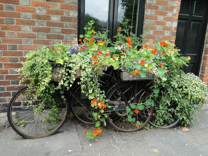 amazing flower beds11
