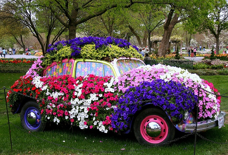 amazing flower beds13