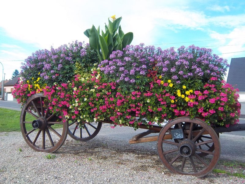 amazing flower beds14