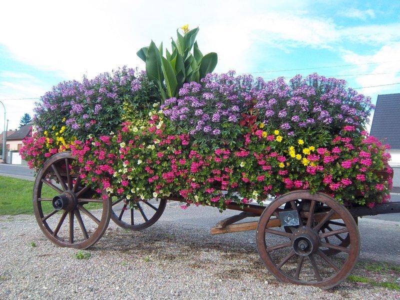 amazing flower beds14