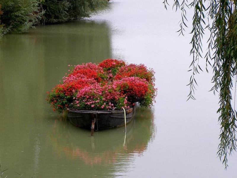 amazing flower beds15