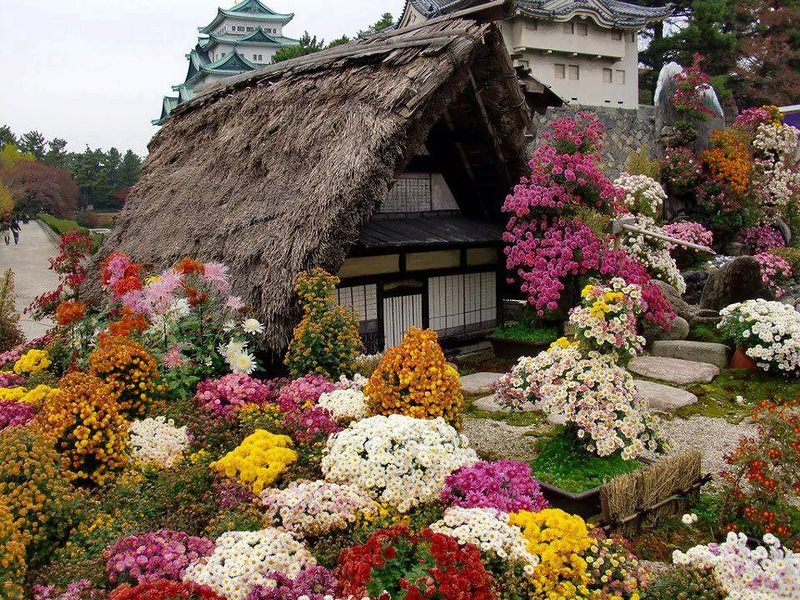 amazing flower beds25