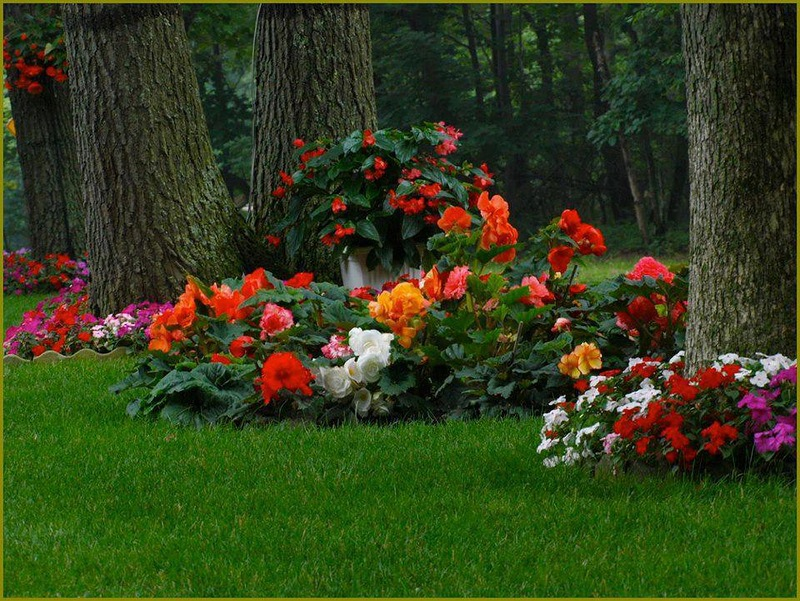 amazing flower beds31
