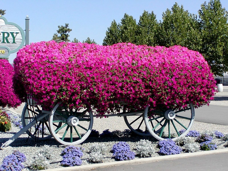 amazing flower beds34