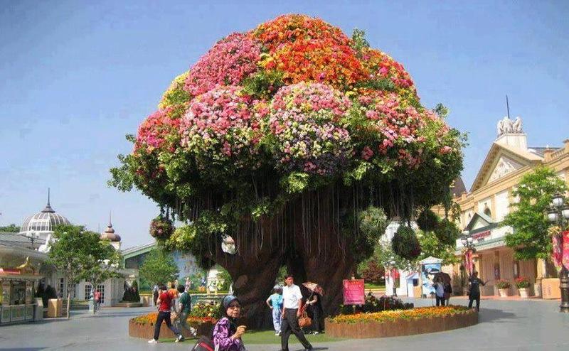 amazing flower beds8