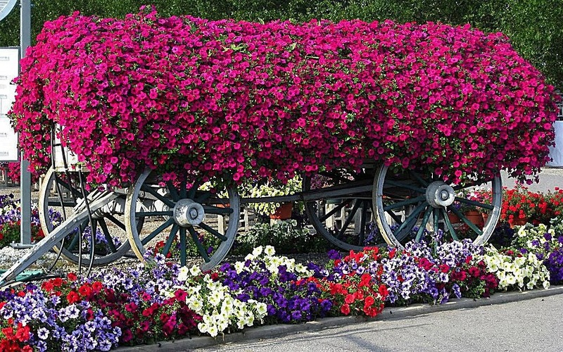 amazing flower beds9
