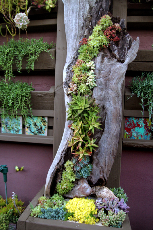 deco with succulents1